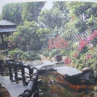 锦绣香江牡丹园