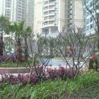 中海观园国际大厦