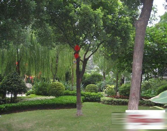 广州富力千禧花园三期图片