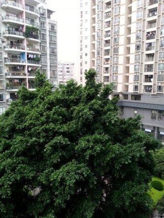 推推99广州房产网芳草轩出租房房源图片